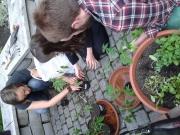 CEU Edible Courtyard Garden Blog