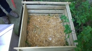 Composting in the Japanese Garden, - By Diana Zadorozhna and Isabela Machado